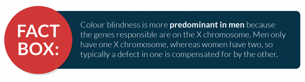 Colour blindness is more predominant in men because the genes responsible are on the X chromosome. Men only have one X chromosome, whereas women have two, so typically a defect in one is compensated for by the other.